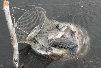 Металлический рыболовный садок